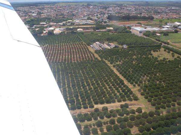 Apos decolar em Itápolis, plantação de laranja