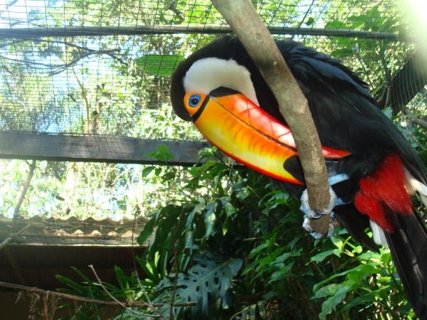 Visita ao Parque das Aves